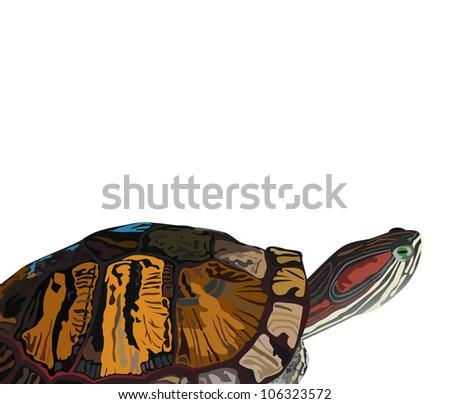Illustration - Turtle isolate on white. - stock photo