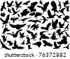 illustration with bird silhouettes isolated on white background - stock vector