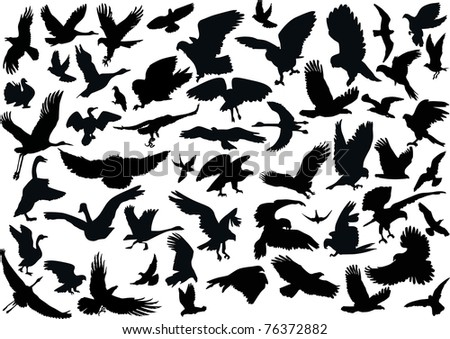 illustration with bird silhouettes isolated on white background