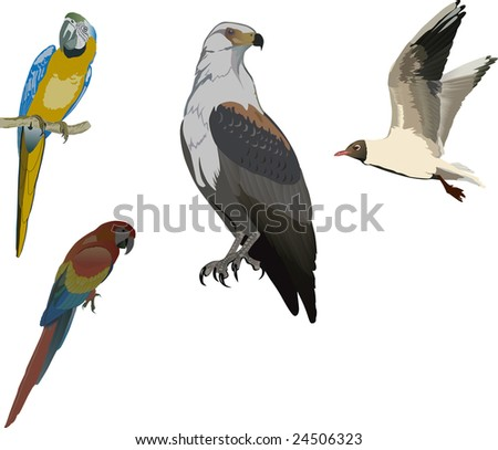 illustration with color birds collection isolated on white - stock photo
