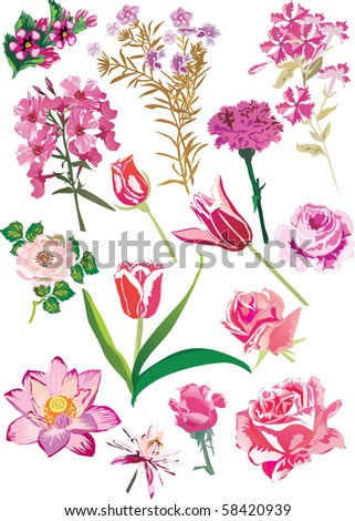 illustration with pink flowers collection - stock photo
