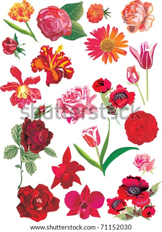 illustration with red flowers collection isolated on white background