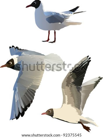 illustration with three gulls isolated on white background - stock photo