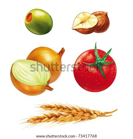 illustrations of onion, hazelnut, tomato, olive and ear of wheat - stock photo