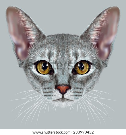 """Illustrative Portrait of Abyssinian Cat. Cute breed of domestic short haired cat with a distinctive Blue """"ticked"""" tabby coat and with Yellow eyes. - stock photo"""