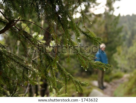 Image for breakup: branches with rain drops like tears and a man silhouette on background. - stock photo