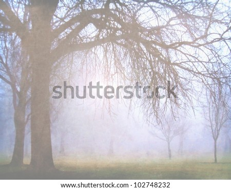 image from nature background texture series (trees) - stock photo