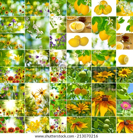 image mix different flowers and fruit closeup