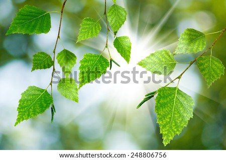 image of a branch with leaves - stock photo