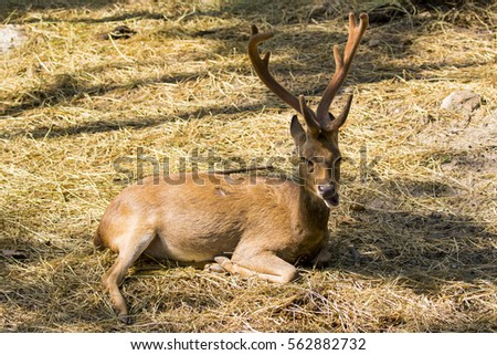 Image of a deer relax on nature background. wild animals.