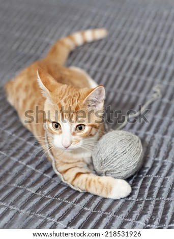 Image of a ginger cat playing with a ball of yarn - stock photo