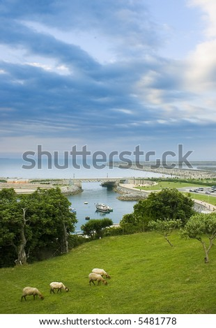 image of a landscape with sheep and sea