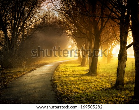Image of a path with trees, meadows and sunbeams - stock photo