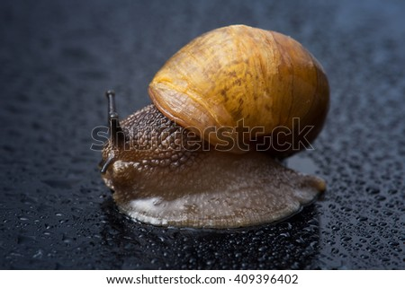 Image of a snail with water droplets (selective focus) - stock photo
