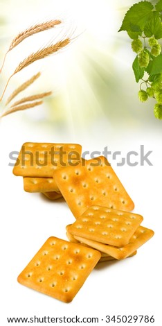 image of a tasty cookie closeup - stock photo