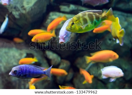 image of a tropical Fish on a coral reef underwater - stock photo