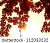 Image of autumnal grape red leaves border, beautiful natural brown frame with white text space, bright yellow sun light through old trees foliage in the fall, grapes harvest season, autumn vineyard - stock photo