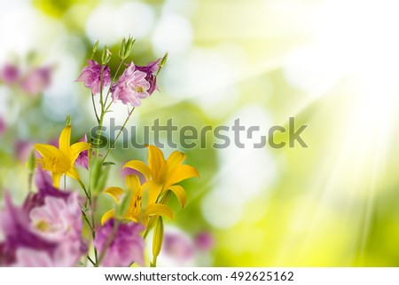 image of beautiful flowers in the garden closeup