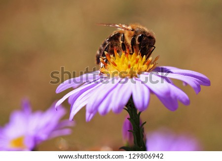 Image of beautiful violet flower and bee - stock photo