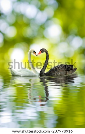image of black and white swans in the shape of heart closeup - stock photo