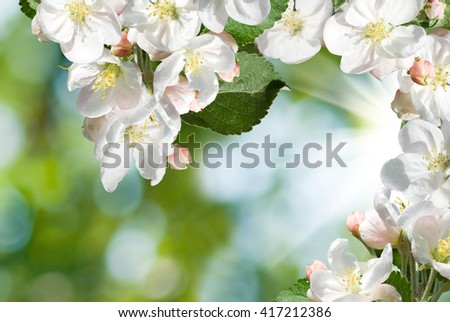 image of blooming branches close up
