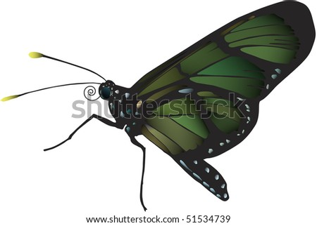 Image of butterfly from Ecuador. Vector image also available - stock photo