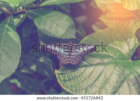 image of butterfly on plant leaf in the garden day time . - stock photo