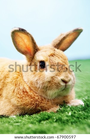 Image of cautious rabbit in green grass with blue sky behind