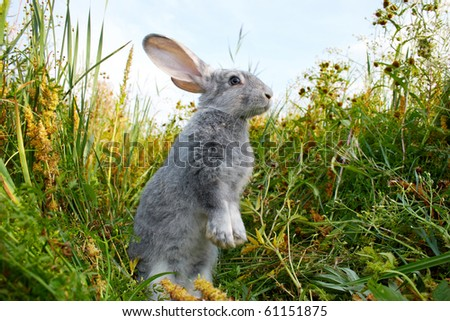 Image of cautious rabbit standing in green grass in summer