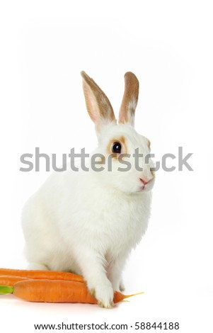 Image of cautious rabbit with carrots sitting in isolation - stock photo