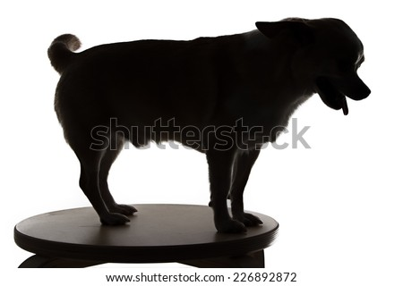 Image of chihuahua's silhouette on white background - stock photo