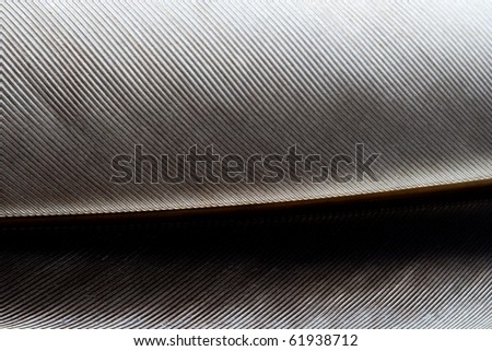 Image of close-up feather with abstract detail.