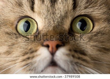 Image of curious house cat close-up - stock photo