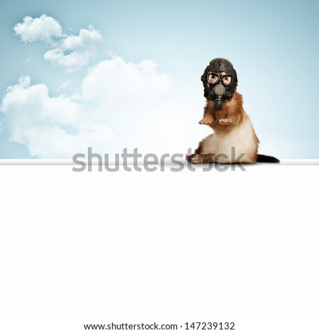 Image of ferret in gas mask. Ecology concept - stock photo