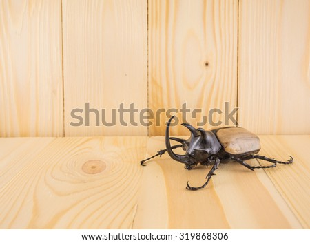 image of five horn beetle on  pine wood table background.