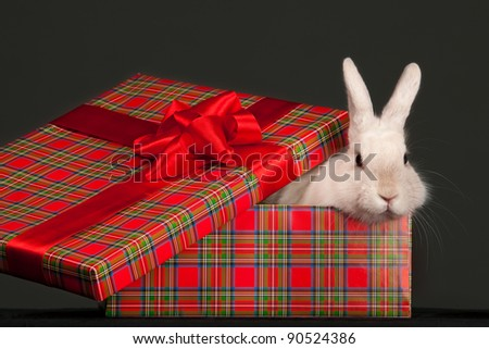 Image of fluffy rabbit in gift box with red bow - stock photo