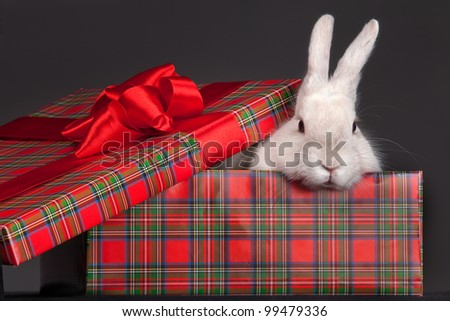 Image of fluffy rabbit in gift-box with red bow - stock photo