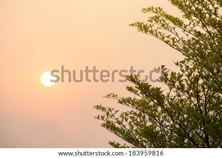Image of forest silhouette against the sunrise - stock photo