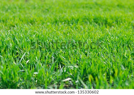 Image of fresh green grass background, spring nature.