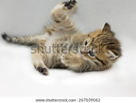 Image of funny tabby kitten playing in studio, close-up - stock photo