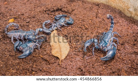 image of Giant scorpions on the ground.