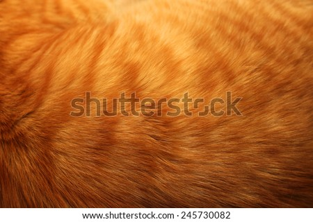 Image of ginger cat's fur background - stock photo