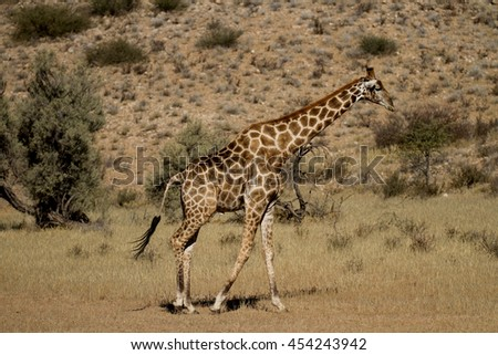 image of giraffe