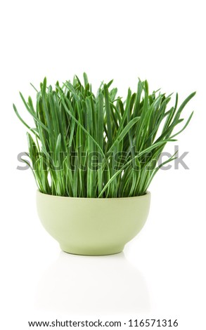 image of grass in flowerpot isolated on white - stock photo