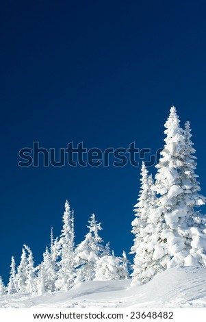 Image of great winter day with white fir trees in snowdrifts - stock photo