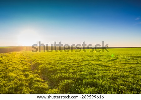 Image of green grass field and blue sky, sunrise shot - stock photo