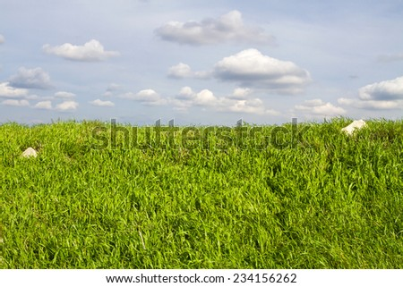 Image of green grass field and bright blue sky and clouds.