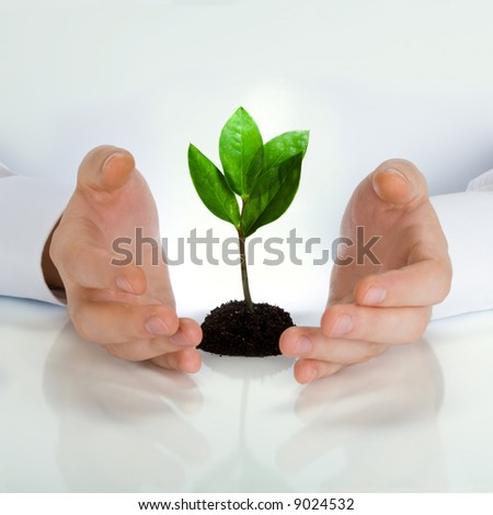 Image of green plant between business man's hands placed on a white table - stock photo