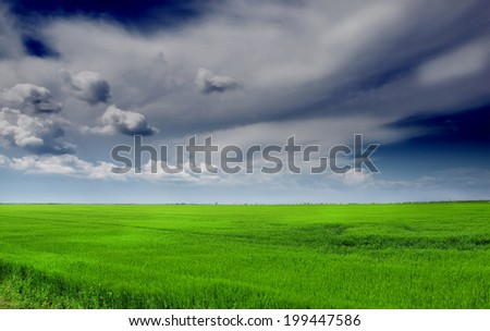 Image of green wheat field and sky - stock photo
