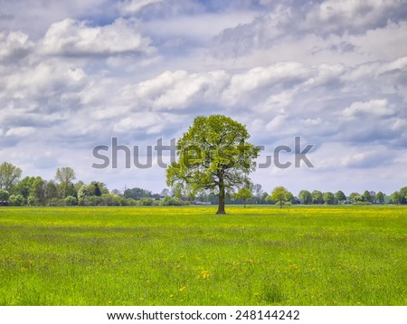 Image of landscape with flowers meadow and tree on a sunny day. - stock photo